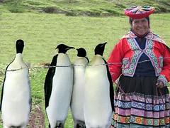 Peru-penguin