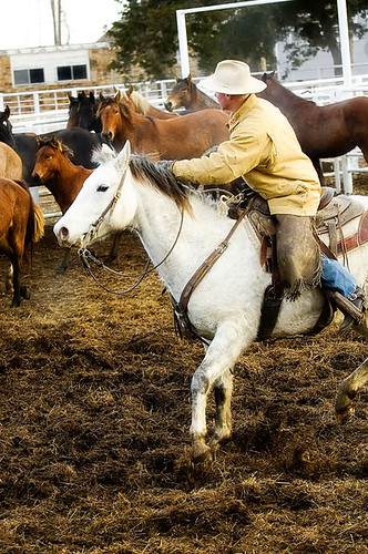 gathering mares 213
