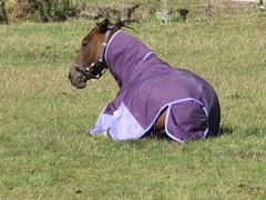 Makara Horse_002 (TELPortfolio) Tags: newzealand horse south valley wellington makara 10millionphotos jalalspagesanimalkingdom southmakara