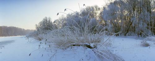 Winterlandschaft am Rhein