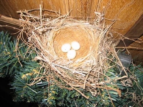 Nest on the wreath