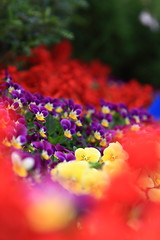 I love this most!  I love colourful! (Steve Wan^_______________,^) Tags: show park flower colour love canon lens eos bay victoria hong kong l usm 2008 ef f4 1740 causeway colouful 24105 40d