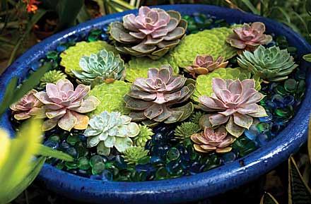 Succulents1205-E