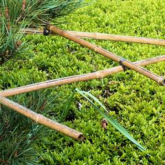 Parc de Maulévrier - Armature en bambou