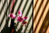 Life Sentence (April Rain Photography) Tags: flowers floral instantfav excapture