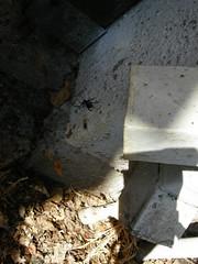 fuck spiders. (10/365)