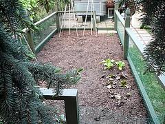 Garden Bed After