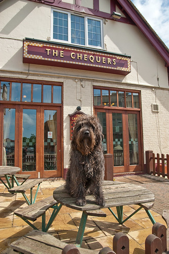 The Chequers Pub Dog