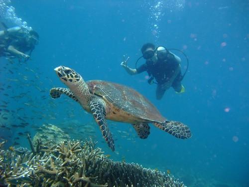www.diver.sg