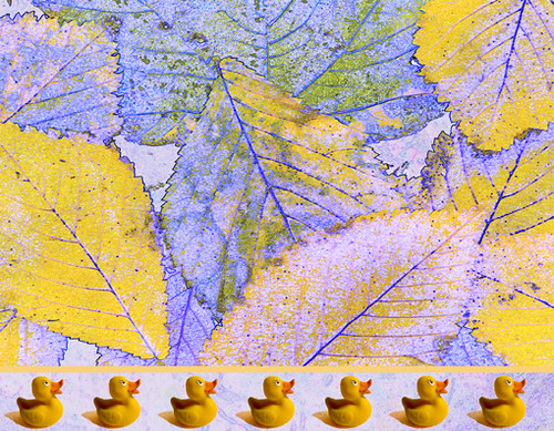 leaves_ducks