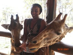 Feeding two giraffes