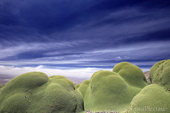 Yareta (LucaPicciau) Tags: mountain green peru southamerica nature flora per andes resina altiplano andean peruvian azorella chungara llareta yareta