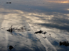 Cloud Reflections (Nola Nate) Tags: sky reflection nature water silhouette clouds outdoors louisiana lafitte swamp marsh silhoutte laffitte ibeauty