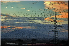The Vesuvius and the Birds (krisdecurtis) Tags: mycity viewfrommyhouse bird birds uccelli vesuvio vesuvius volcano vulcano napoli napule naples sky cielo clouds nuvole landscape paesaggio dream panorama sunrise alba love flock stormo flight volo birdsinflight nature animals spectacular masterpiece marvels meraviglie italy italia maddaloni caserta campania krisdecurtis kris 2008 canon 300d canon300d interesting interestingness cityscape