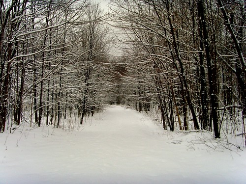 Path in the Snowy Woods