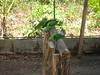 Feeding Parrots (Bradfordian Cliff) Tags: green feeding philippines parrot palawan crocodilefarm palawanwildliferescueandconservationcenter