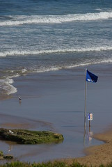 Blue flag (Rowen Atkinson Photography) Tags: beach water surf waves pentax flag seagull bulli 366 woonona 36649 pentaxk10d sigma2870f28exdf