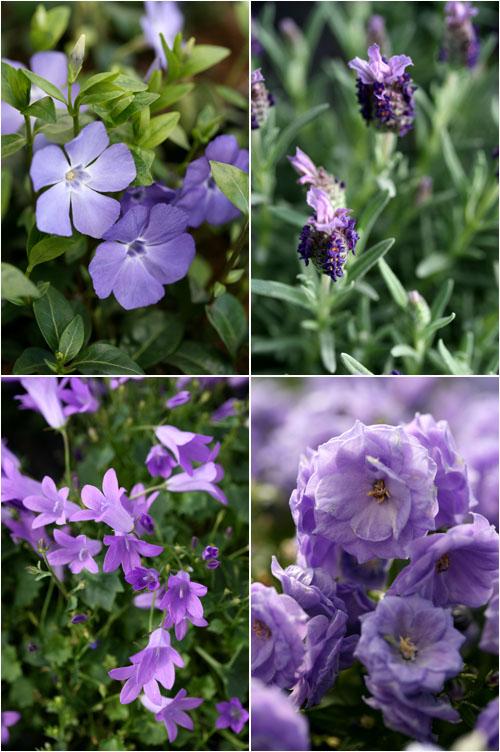Fiori violetti
