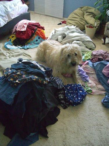 Laundry wars