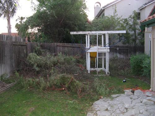 backyard 001