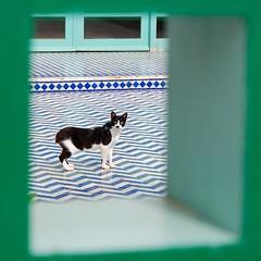Descubierto (Rafa Calderón) Tags: animals cat nikon gato looks hi ih marroco