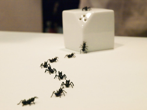 Ants Salt/Pepper Can