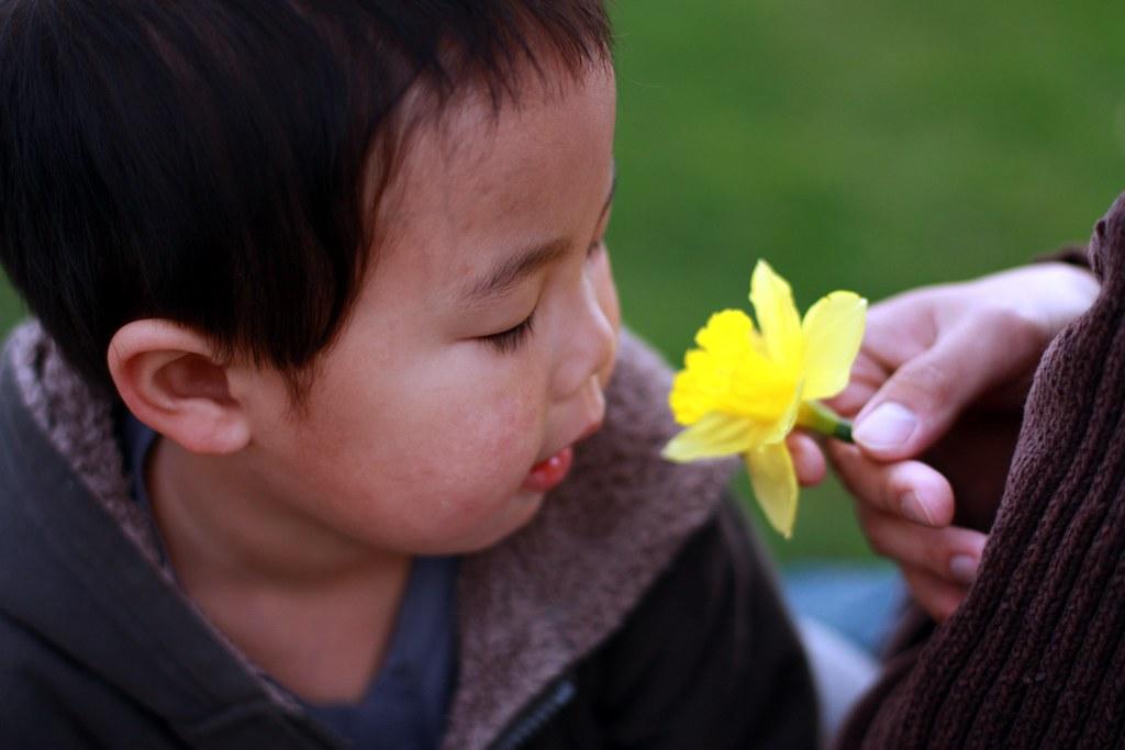 daffodil5