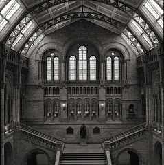 Natural History Museum (david_fisher) Tags: uk blackandwhite bw london history 6x6 mamiya tlr blancoynegro film museum architecture mediumformat design arquitectura natural interior bn xp2 400 londres museo ilford 2007 c33 davidfisher
