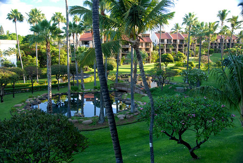 Maui 06