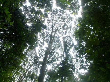 frim-canopy