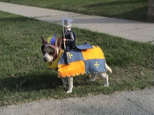 knight dog