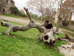 A piece of trunk (Paolito) Tags: old ghost country roscigno