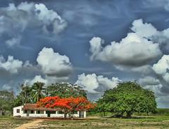 Chuva no Sertão [HDR] (Pedro Cavalcante) Tags: ranch brazil sky cloud house beautiful brasil clouds casa fuji farm interior céu ciel ceará finepix nuvens s5000 sítio marco fujifilm nuage nuages nuvem maison hdr bauernhof fazenda nordeste sertão diaadia finepixs5000 10faves zonarural 5for2 aplusphoto diaadiabrasileiro pedrocavalcante