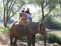 15 gita sull'elefante