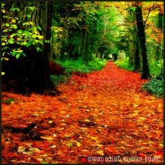 THE LIGHT AT THE END................ (Edward Dullard Photography. Kilkenny, Ireland.) Tags: autumn kilkenny ireland automne photographic irland eire emeraldisle ierland dullard abigfave edwarddullard 0nlythebestare otone societyedward