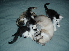 kittens playing with illy 4