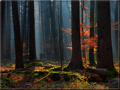 Winter forest with sunrays and red leafes (MyOakForest) Tags: winter mist forest bayern bavaria sin rays sonne sonnenstrahlen wlad 10faves superbmasterpiece theunforgettablepictures betterthangood goldstaraward artinoneshot