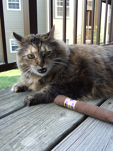 Catnip Cigar Mine