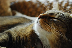 (martyna_ksr21) Tags: animals cat photo photos nikkor d80 nikond80 5prettykittycommentsparti
