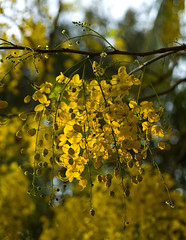 Happy Vishu! (New Year)