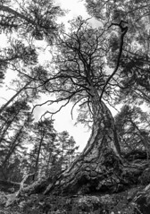 Cell division and organismal competition (martin palmqvist (ALBUMS)) Tags: natureporn naturepoetry treeoflife life earth rocks trees forest