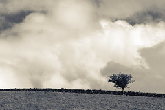 One Tree Hill (Dan Baillie) Tags: sky blackandwhite tree monochrome field clouds u2 landscape mono scotland space hill joshuatree galloway onetreehill dumfriesandgalloway puddock wigtownshire danbaillie bailliephotographycouk bailliephotography wigtownshirephotographer dumfriesandgallowayphotography