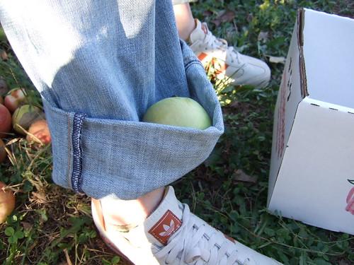 Linvilla Orchard 012