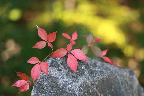 Red Leaves on Stone