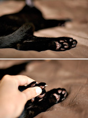 Shredding Tools (Kim Smith-Miller) Tags: brown black cat kitten diptych toes nikond50 nikkor50mmf18 claws 2007 footpads