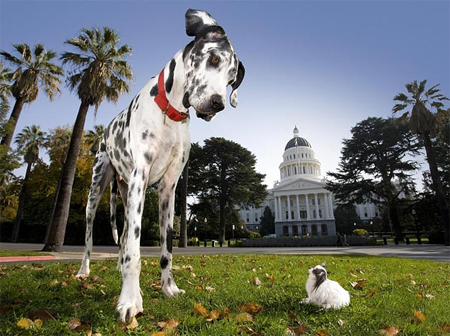 World's tallest dog meets world's smallest dog