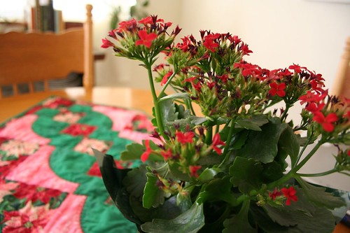 Christmas flowers and table runner