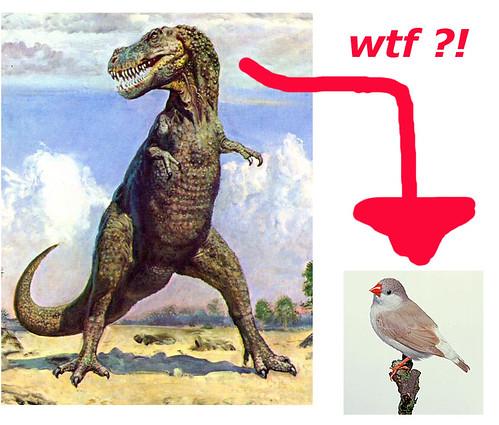rex bird