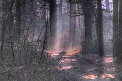 Magical forest (fotociclista) Tags: forest atmosphere atmosfera bosco abigfave wowiekazowie