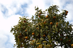 Orange Tree (Eike Bernhardt) Tags: rome oranges